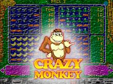 Crazy Monkey: играть в демонстрационном режиме
